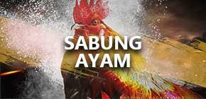 sabung ayam, situs sabung ayam, sabung ayam online, agen sabung ayam, sabung ayam terpercaya