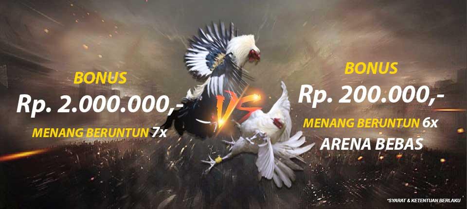 sabung ayam online, agen sabung ayam, situs sabung ayam, sabung ayam online terpercaya