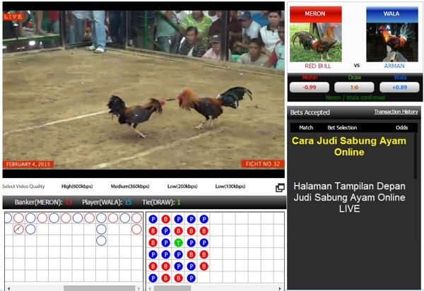 cara bermain taruhan sabung ayam online