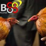 Taruhan Sabung Ayam Online Lebih Aman Dimainkan