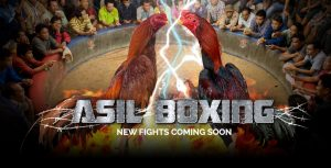 asil-fight-300x153